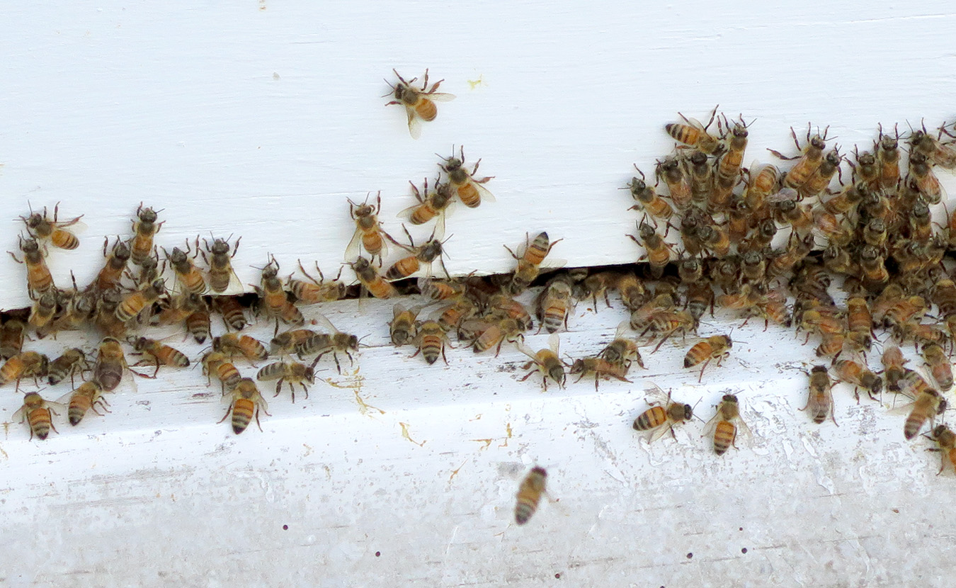 Forestry bees hostile environment sexual harassment