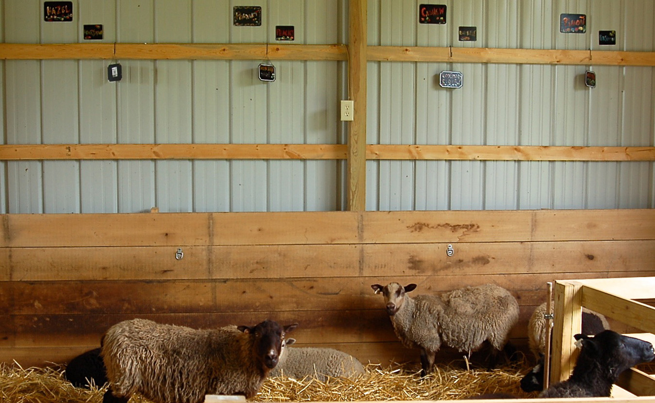 When not out in the pasture, Whitney and Kip's ewes hang out in the sheep barn, beneath name cards that group the founding mothers — Hazel, Peanut, Cashew, and Piñon — with their fruit- and herb-named offspring. | Photo by Lindsay Welsch Sveen