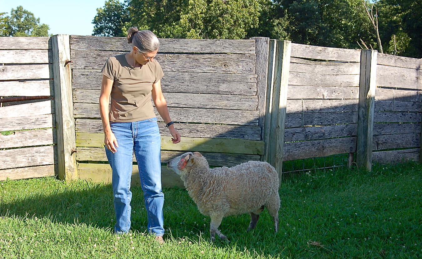 "As she roams the property, Whitney is usually followed closely by a young ram, named Huckleberry (""Huck""). 