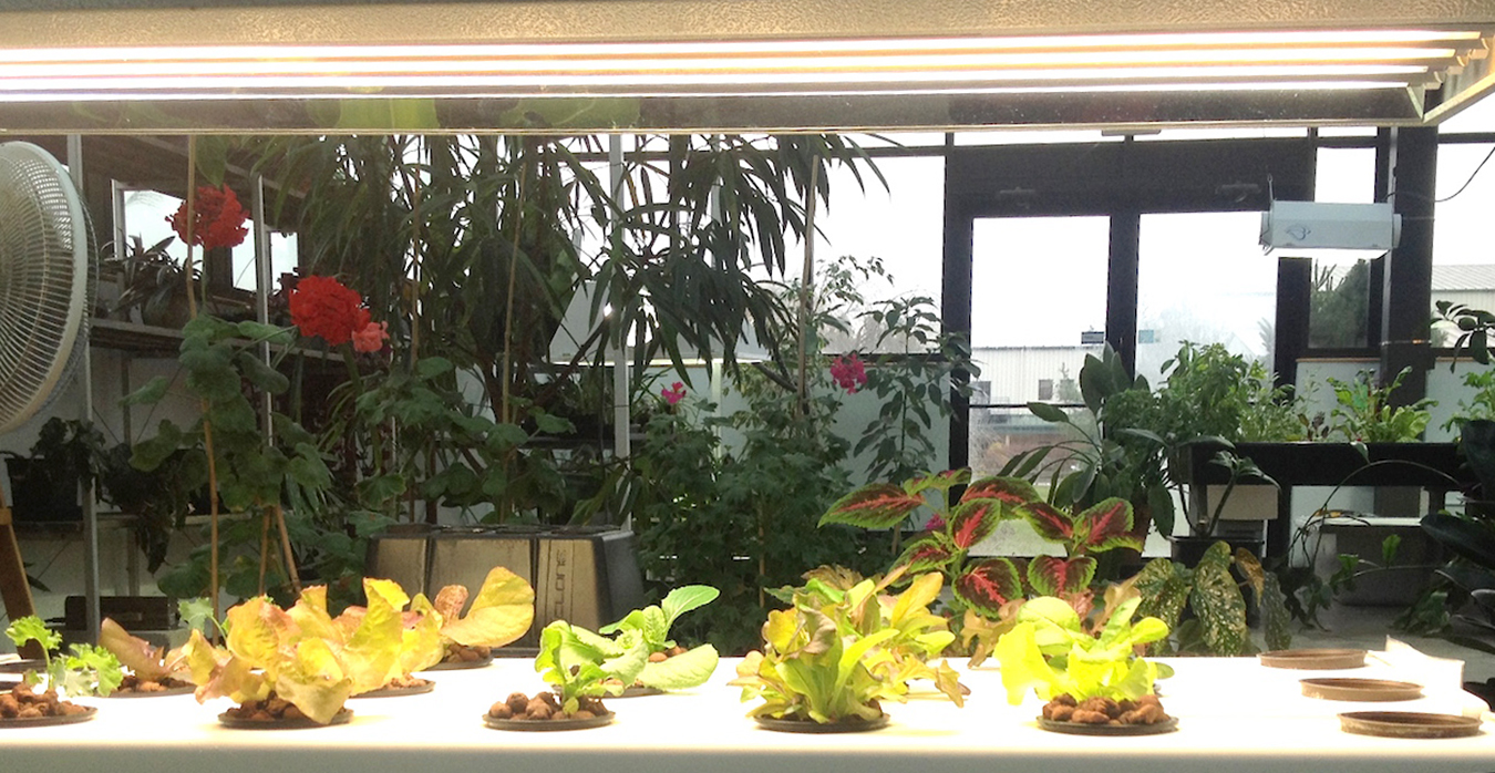 Assorted lettuces growing under grow lights in a hydroponics system at Worm's Way. | Photo by Susan M. Brackney