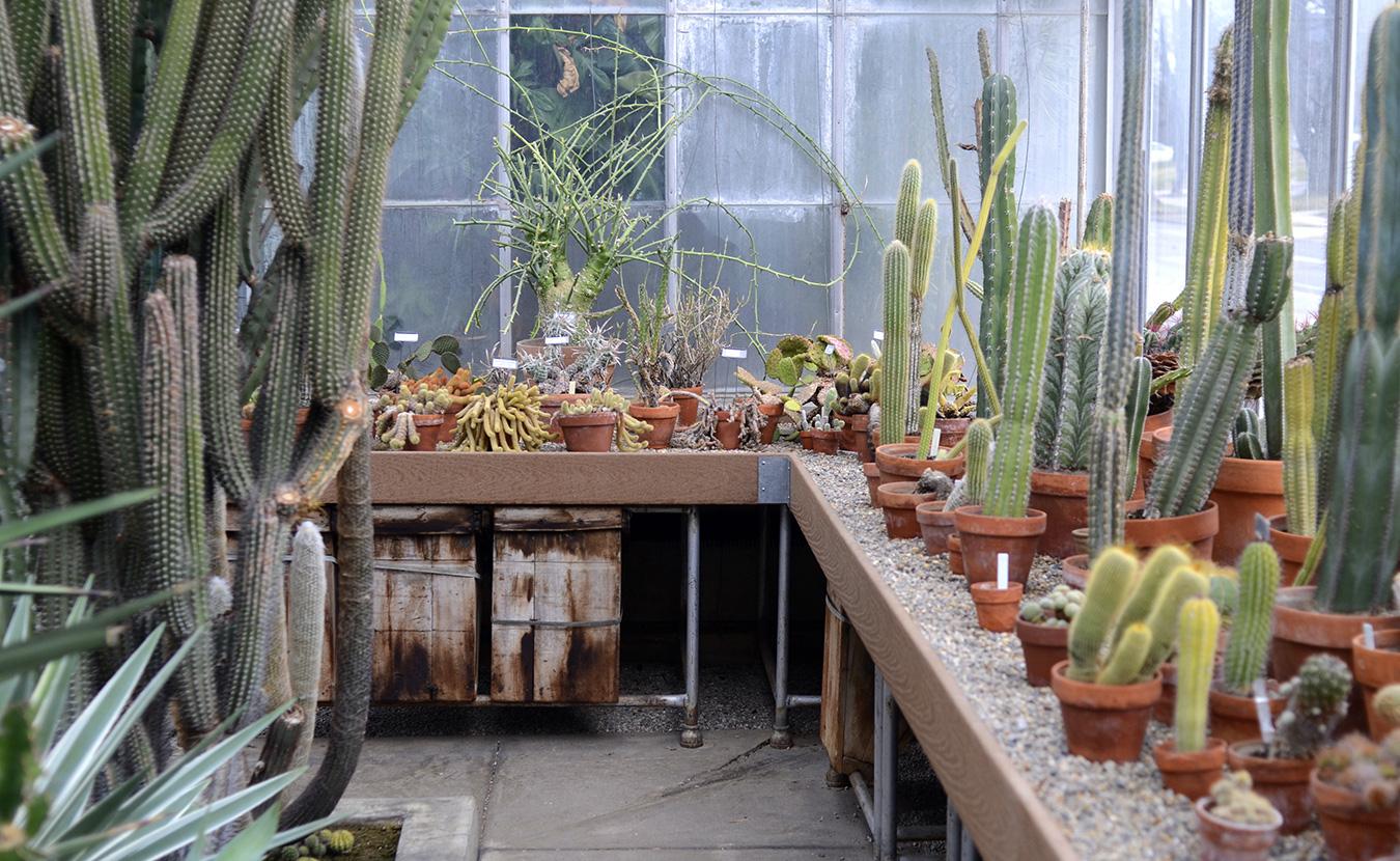 Cactus Room_web