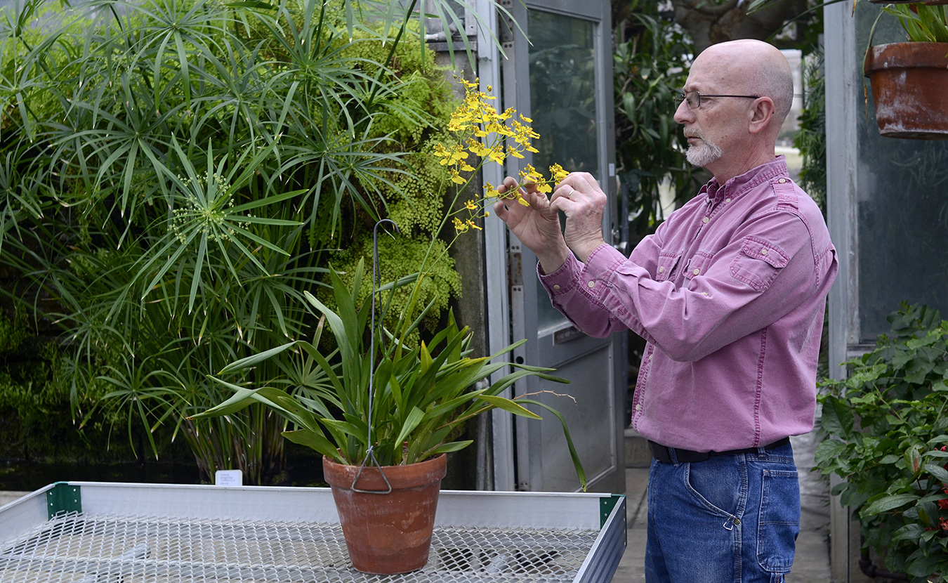 John Lemon, the greenhouse supervisor, checks one of the many plants at the Jordan Greenhouses while on his rounds.