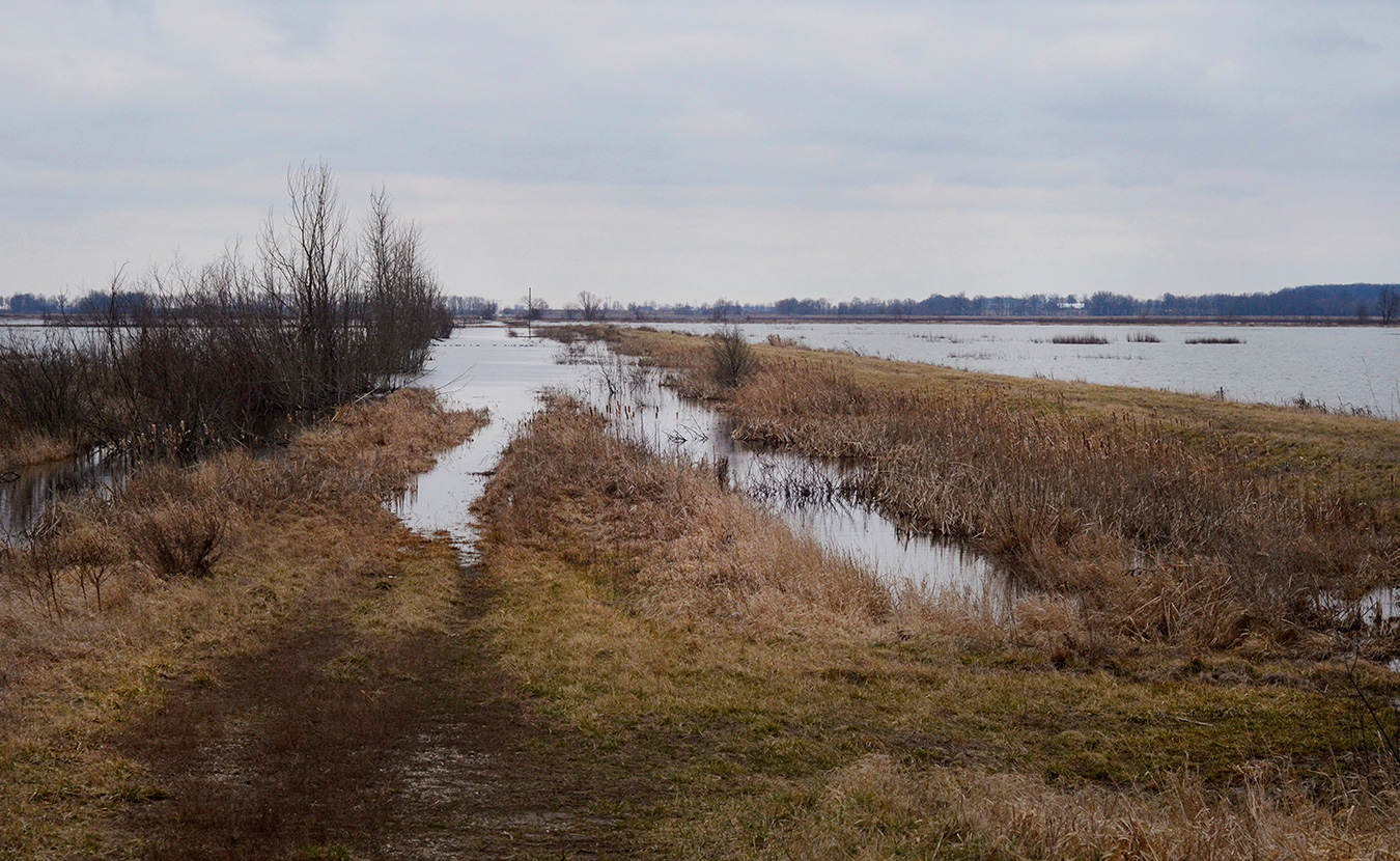 This former drainage ditch along the eastern edge of Goose Pond was originally used to make the surrounding farmland arable. The adjacent levee helped to reclaim the wetlands to its natural state and continues to help regulate water levels. | Photo by Lynae Sowinski