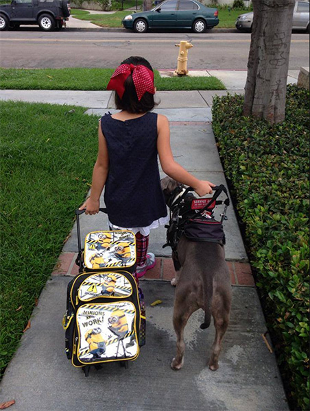 "Service dogs provide the confidence and safety needed for individuals to do things they otherwise wouldn't be capable of. In this photo, PupCake The Service Dog accompanies ""her girl"" to her first day of school. 