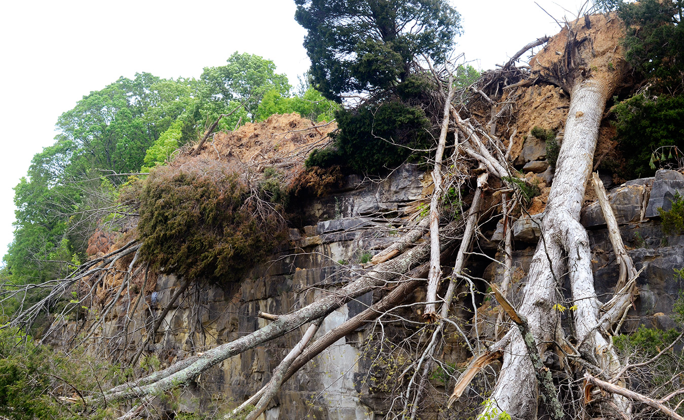 Trees and dirt hang off the edge of the 65-foot cliff, which Indiana Limestone Company hopes will deter jumpers. | Photo by Lynae Sowinski