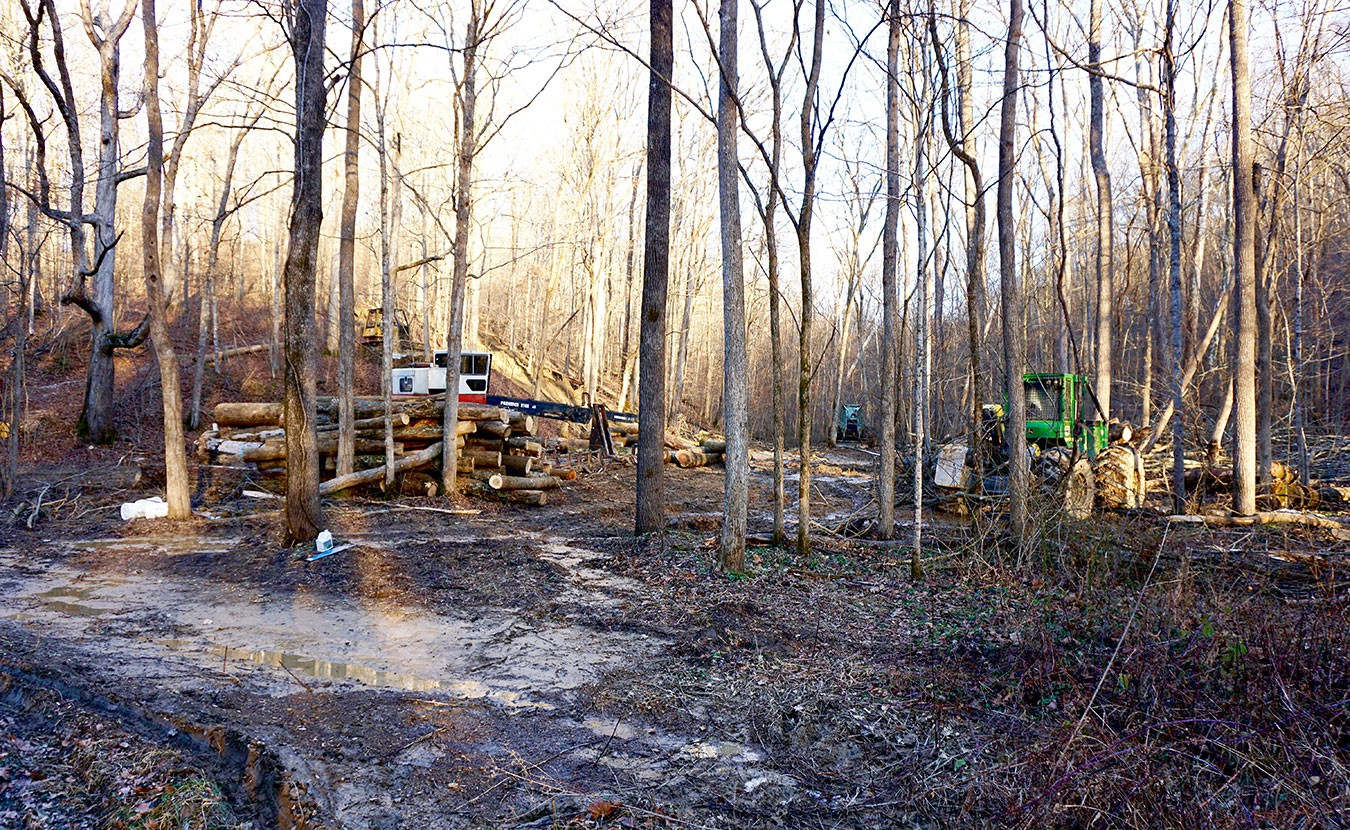 A Hike On The Tecumseh Trail Now Ends In Destruction