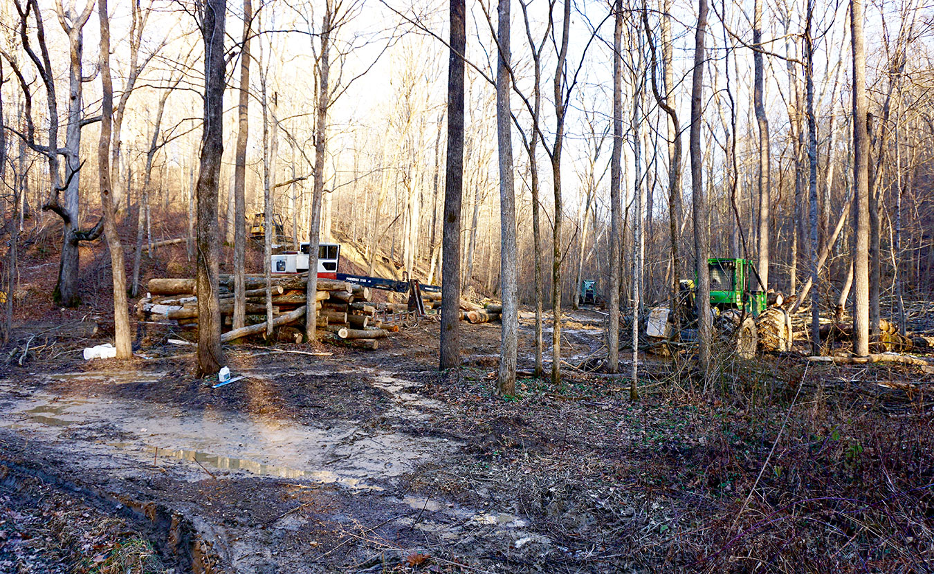 Where once there was a trailhead near Crooked Creek Road on the Tecumseh Trail, Matt Flaherty encountered logging equipment and a trail in ruin. | Courtesy photo