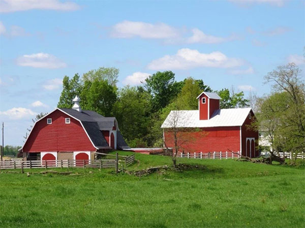 Tom Modisett barns in Carrollton Township, Carroll County. | Photo courtesy of the Indiana Barn Foundation