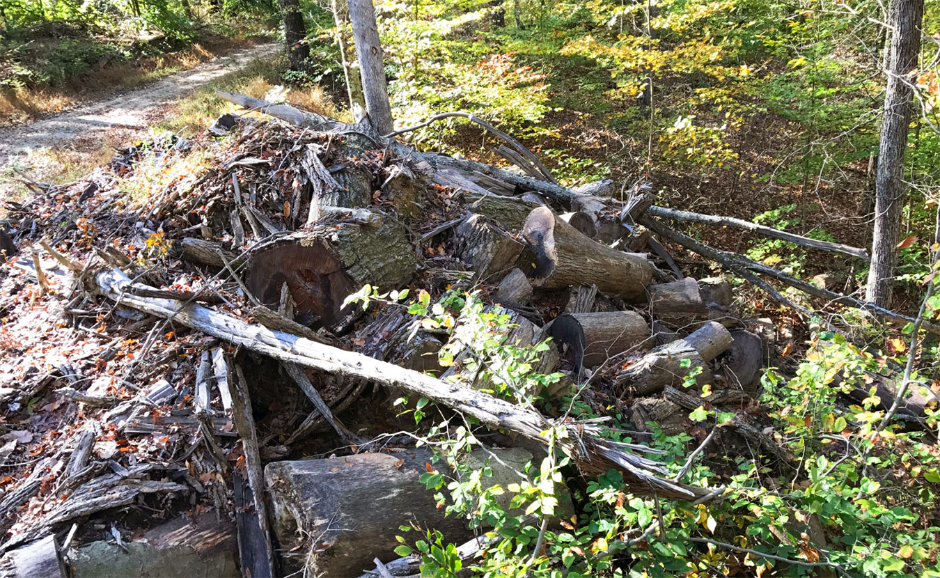 "Cathy Greene took this photo of a ""boneyard"" on Mill Ridge while hiking the Tecumseh Trail. These trees were not used and were pushed off the logging road where they have been left to rot. 