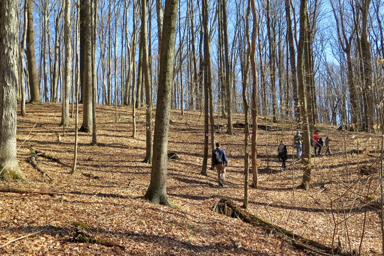 """Hikers wander along the trails at Sycamore Land Trust's Porter West. Writer Jonah Chester describes the preserve as a """"diamond in the rough,"""" with sinkholes, a former composting site, and a cemetery.   Limestone Post"""