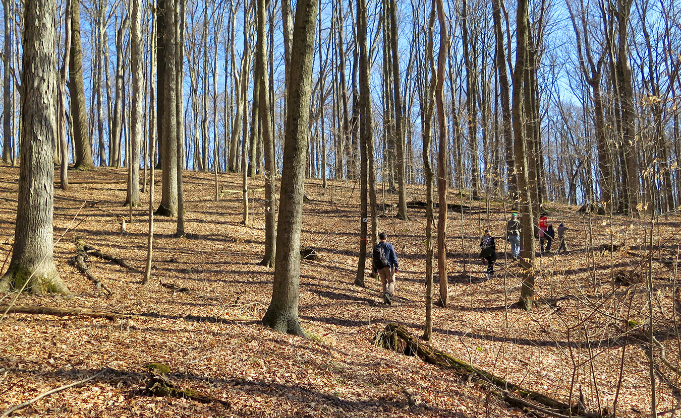 "Hikers wander along the trails at Sycamore Land Trust's Porter West. Writer Jonah Chester describes the preserve as a ""diamond in the rough,"" with sinkholes, a former composting site, and a cemetery. 