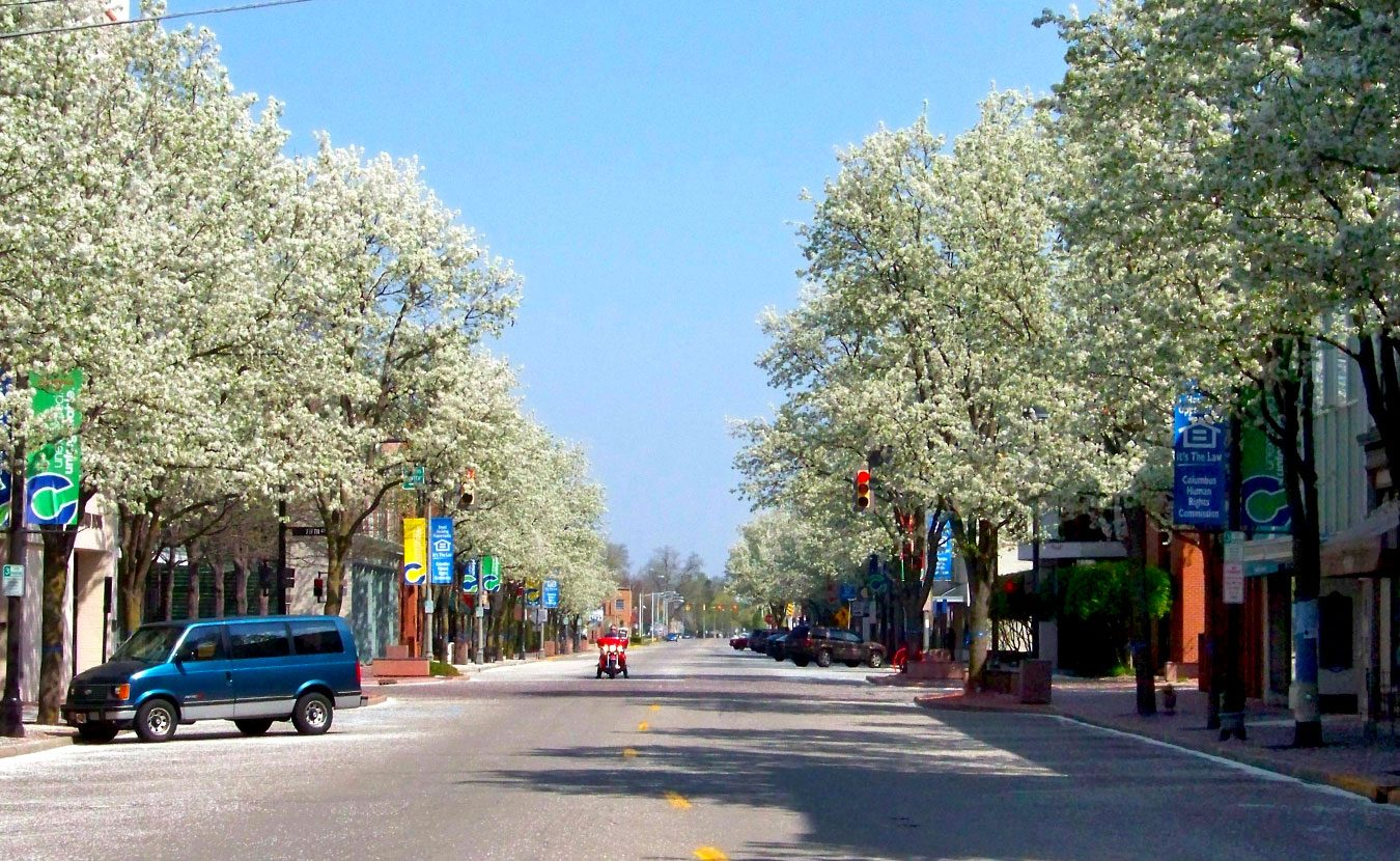 They're a centuries-old assault on our environment, but eradicating invasive plants, such as the Callery pear tree (pictured here along the streets of Columbus, Indiana) requires more than pulling them out by the roots — especially since big box stores still sell them and red tape in the governor's office still allows those sales. | Photo by Larry Brackney