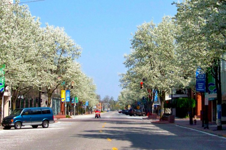 They're a centuries-old assault on our environment, but eradicating invasive plants, such as the Callery pear tree (pictured here along the streets of Columbus, Indiana) requires more than pulling them out by the roots — especially since big box stores still sell them and red tape in the governor's office still allows those sales.   Photo by Larry Brackney