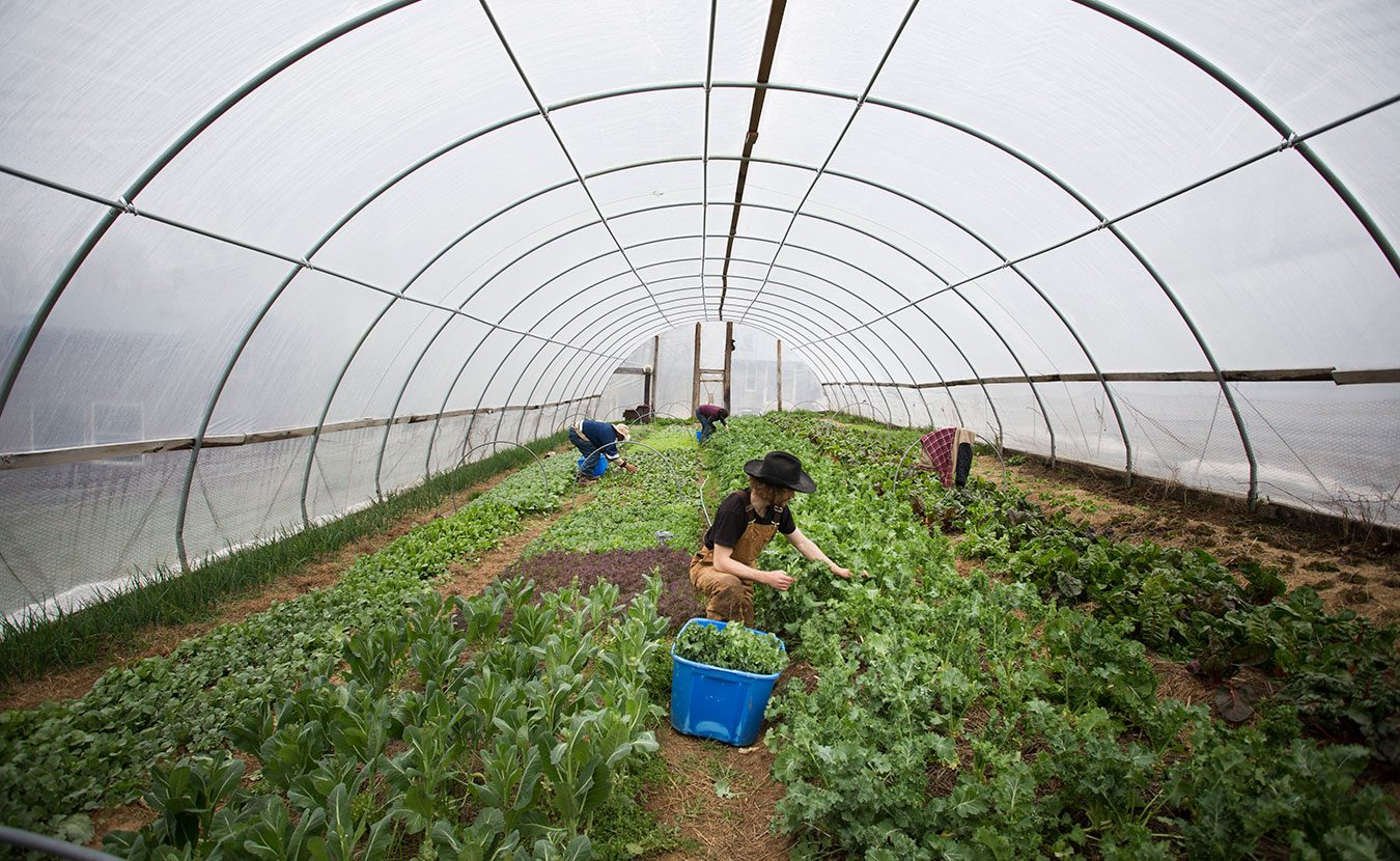 Knowing where your food comes from is more important than ever. With the first Bloomington Community Farmers' Market of the season on Saturday, getting to know the farmers who produce it is easier than ever. Photographer Chaz Mottinger visited three farms to give us a closer look as they prepare for the spring market season: Barnhouse Farms, Linnea's Greenhouse, and Living Roots Farm and Sustainable Living Center (pictured here).   Photo by Chaz Mottinger
