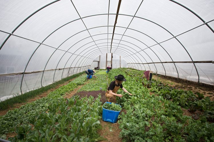 Knowing where your food comes from is more important than ever. With the first Bloomington Community Farmers' Market of the season on Saturday, getting to know the farmers who produce it is easier than ever. Photographer Chaz Mottinger visited three farms to give us a closer look as they prepare for the spring market season: Barnhouse Farms, Linnea's Greenhouse, and Living Roots Farm and Sustainable Living Center (pictured here). | Photo by Chaz Mottinger
