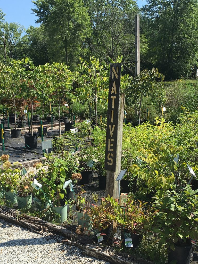 The nursery carries a variety of native plants, including dogwood and redbud trees and chokeberry and winterberry bushes.