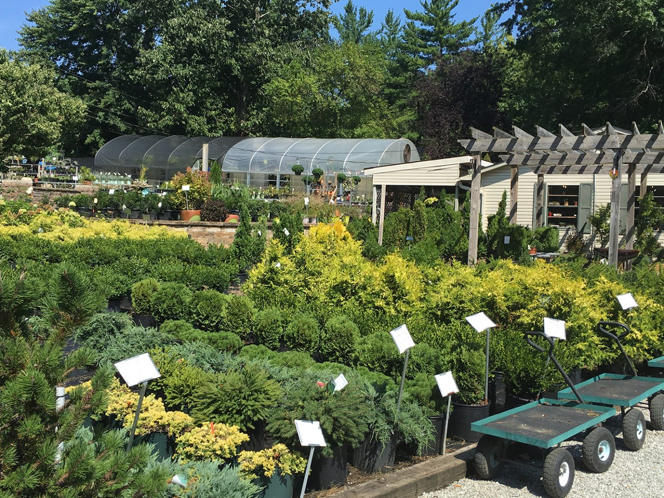 Bloomington Valley Nursery isn't just a resource for household green thumbs. They also supply local landscaping companies and stock plenty of trees, evergreens, and shrubs for bigger projects.