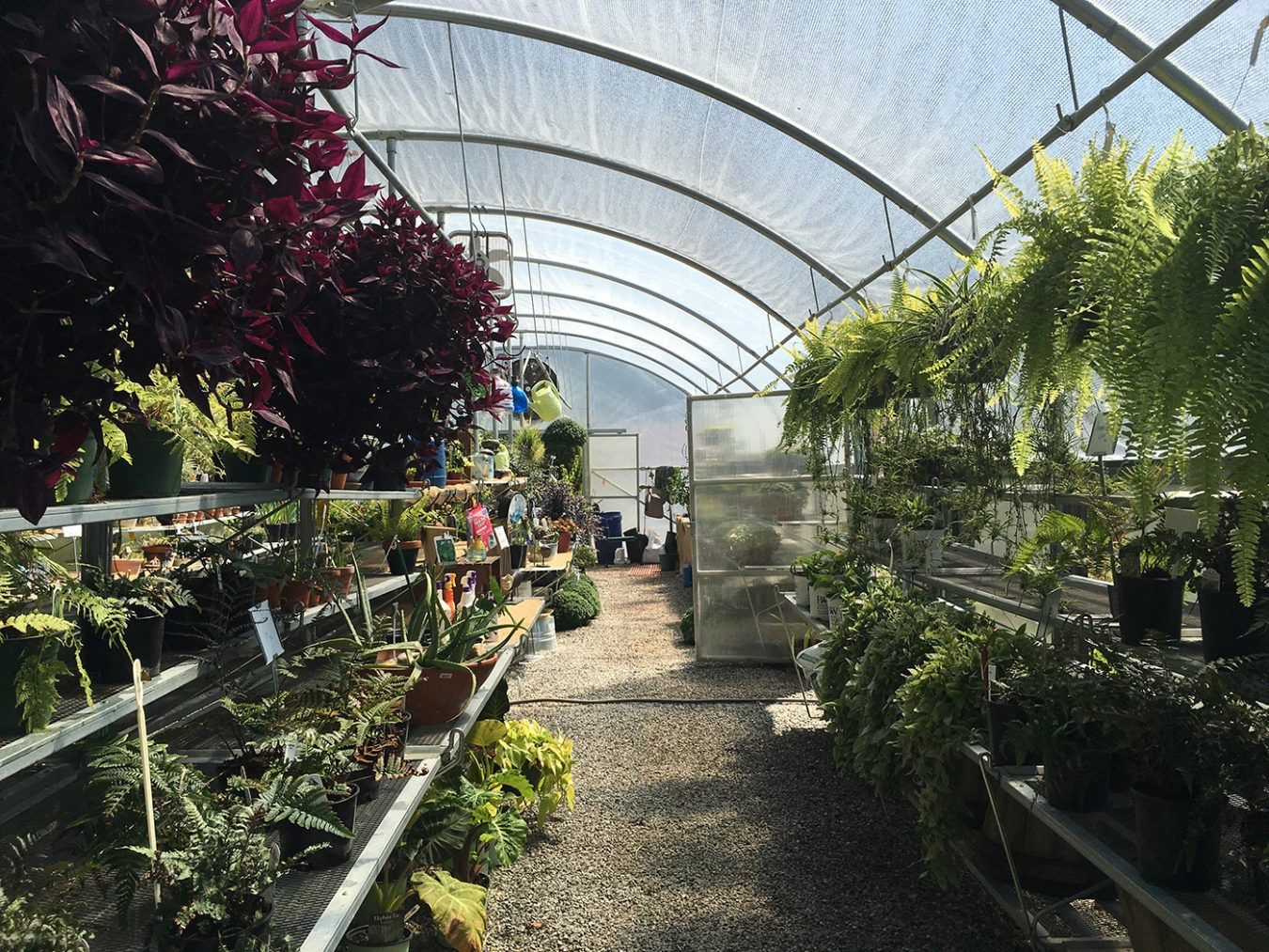 Explore the nursery's walking paths and greenhouses to become acquainted with the variety of plants — an array of indoor and outdoor flora offers something for every living space.