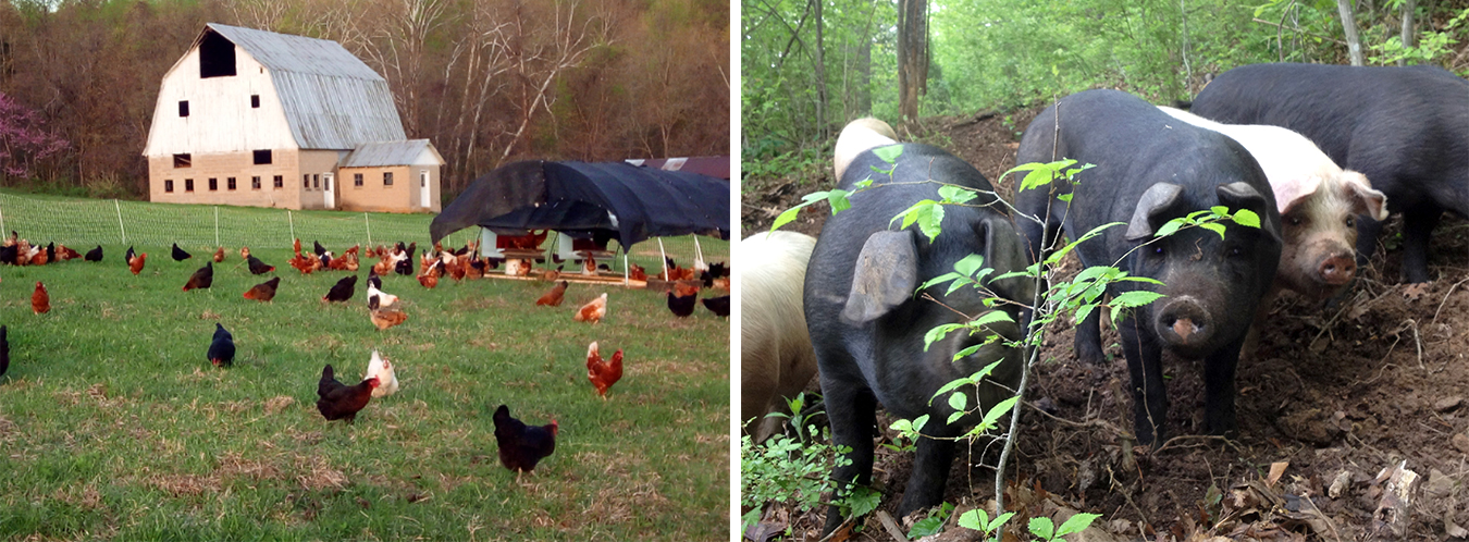 Maple Valley Farm and Harvest Partners have adapted the traditional CSA to better suit their needs. | Courtesy photos
