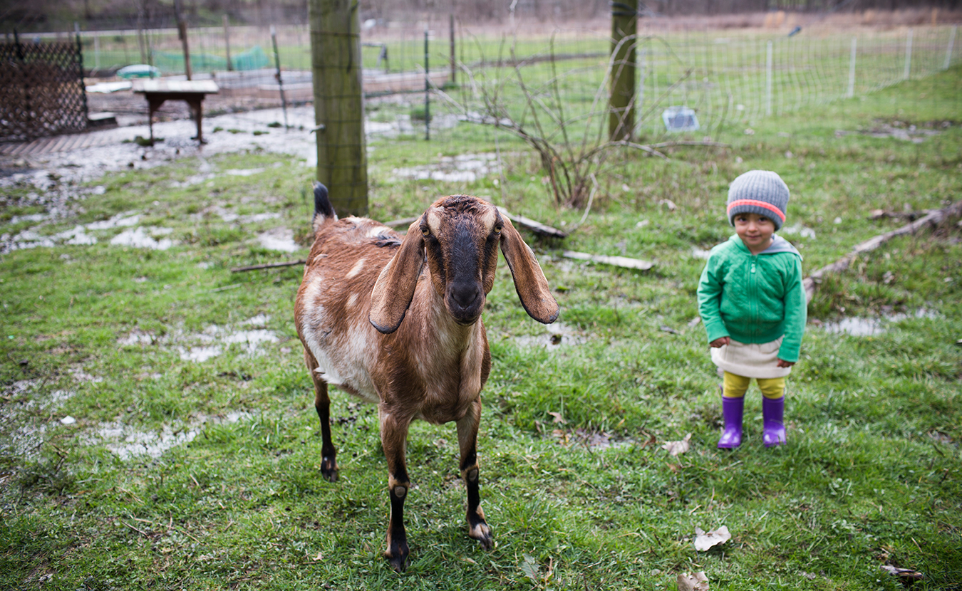 As we approach New Year's, LP takes a look back at our top stories of 2018. This photo appeared in a photo series on local farms in April. Two-year-old Esmé and Little John, a small male goat, pose for a picture on the Barnhouse Farms property. The family has two does, named Meg and Sprinkles, whom they milk for the soap, and Little John, whom they keep as a companion for the does. | Photo by Chaz Mottinger