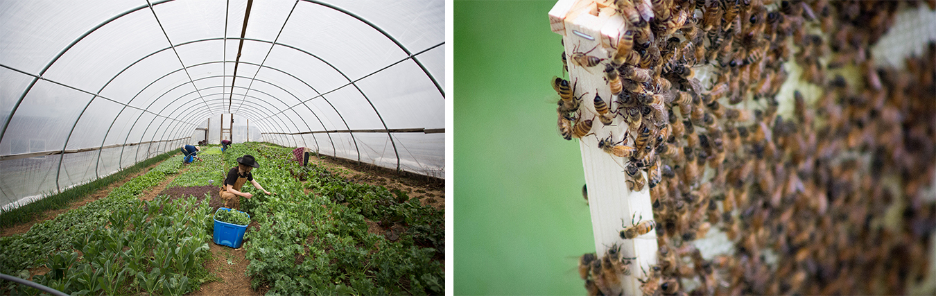 (left) Photographer Chaz Mottinger visited three farms to give us a closer look as they prepare for the spring market season: Barnhouse Farms, Linnea's Greenhouse, and Living Roots Farm and Sustainable Living Center (pictured here). | Photo by Chaz Mottinger (right) When writer Erin Hollinden decided to start her own beehive, and save the world, she found plenty of support from a community of experts and other beekeepers. Here, Hollinden's bees cover one of the frames lifted from the hive. | Photo by Marla Bitzer