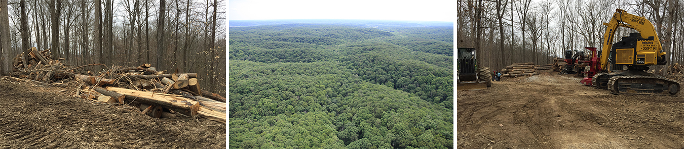Many Hoosiers are unaware that Indiana has large blocks of contiguous forest that are approaching old growth conditions. (left and right photos) But many of these old-growth sections are at risk of being logged, such as what happened in Yellowwood State Forest last year. | Limestone Post (center) This block of the Morgan-Monroe Back Country Area is on the cusp of returning to old growth. | Photo by Elizabeth Mahoney