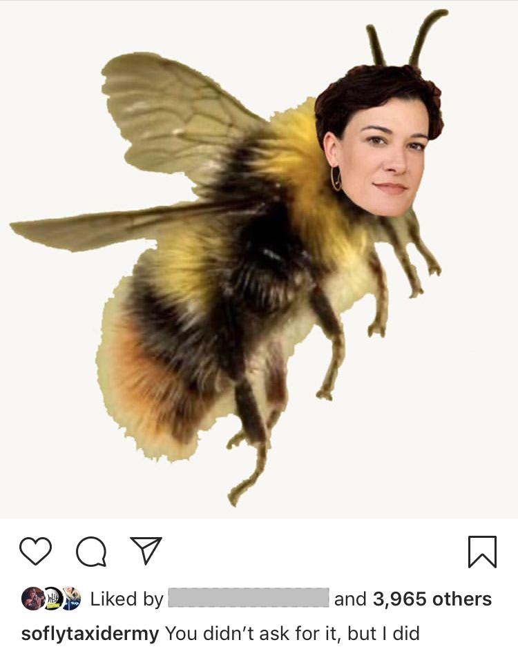 Beckman as a bee. | Courtesy photo
