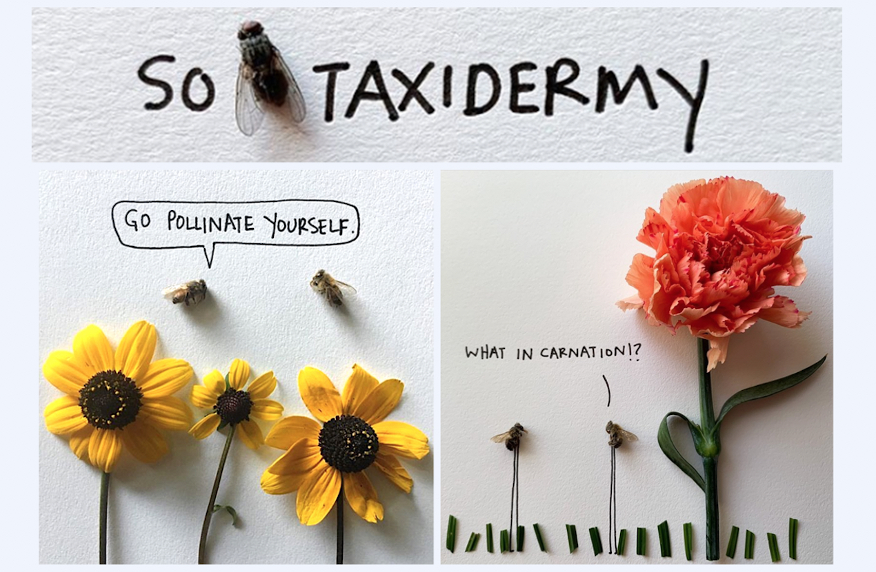 "Ali Beckman brings bugs to life on Instagram @SoFlyTaxidermy, which has more than 140K followers. While the Bloomington resident says her goal is ""to make people laugh"" and see the beauty in insects, her cartoons often address grittier topics. A collection of her work is being published by Red Lightning Books. 