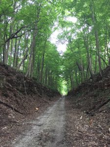 Hitting the trail — as in the Milwaukee Trail in Bedford — will soon have you surrounded by forest and limestone.   Limestone Post